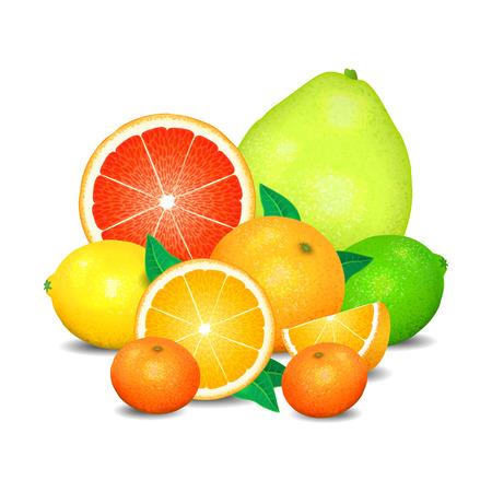 Fruit of citrus, set of citrus fruit. Citrus fruits (orange, lemon, lime, grapefruit, pomelo, mandarin).