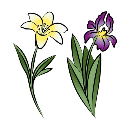 lily flowers: Set of two outlined flowers. Lily and iris In sketch hand drawn style. Vector illustration