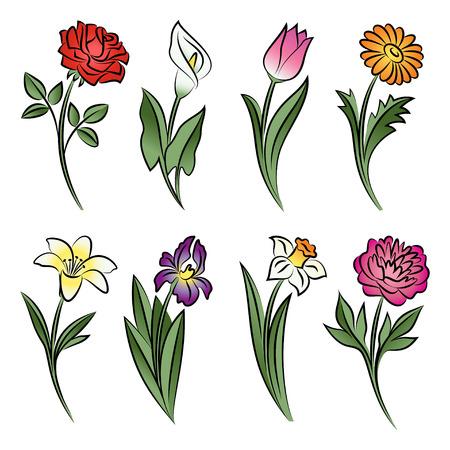 Raccolta di fiori delineati. Calla, rosa, tulipano, giglio, peonia, narcisi, iris e margherita in schizzo a mano stile disegnato. illustrazione di vettore