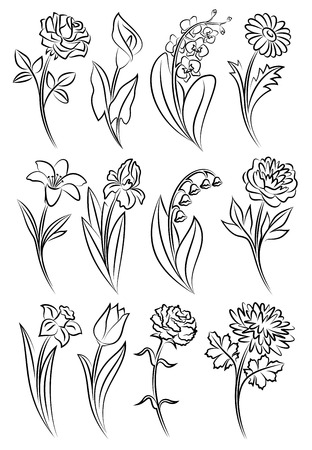 lily flowers collection: Collection of outlined flowers. Orchid, chrysanthemum, carnation, calla, rose, tulip, lily, peony, narcissus, iris and daisy. Vector illustration