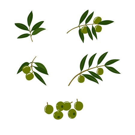 Set of twigs and olive leaves and green olives. Çizim