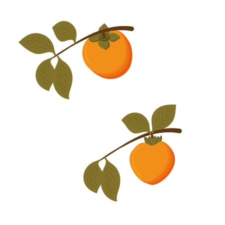 Set of two branches with leaves and orange juicy ripe persimmon fruits, isolated on white background. Vector flat illustration. Stock Illustratie