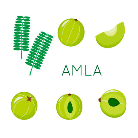 Amla set, indian gooseberry, isolated on white background. Vector illustration.