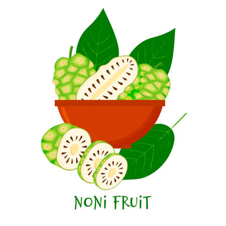 Morinda citrifolia, noni fruit, superfood isolated on white background in bowl. Organic healthy food. Vector cartoon illustration. Illustration