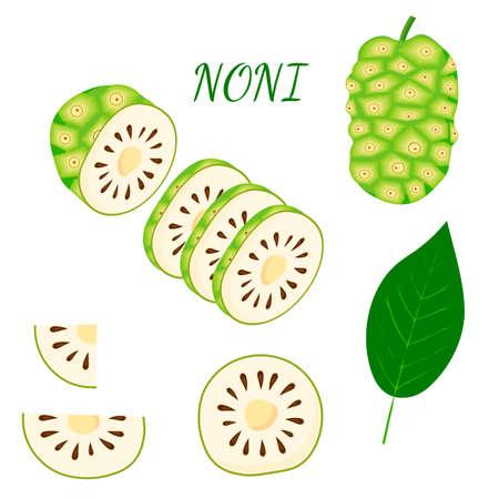 Set of morinda, noni fruit, superfood, isolated on white background. Organic healthy food. Vector cartoon illustration. Illustration