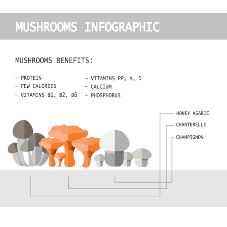 illustration of colorful flat design style forest mushroom infographic with mushroom names and benefits for health