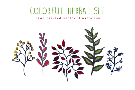 hand painted: illustration of colorful hand painted herbal set