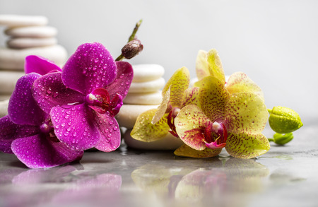 White spa stones with orchid on gray background