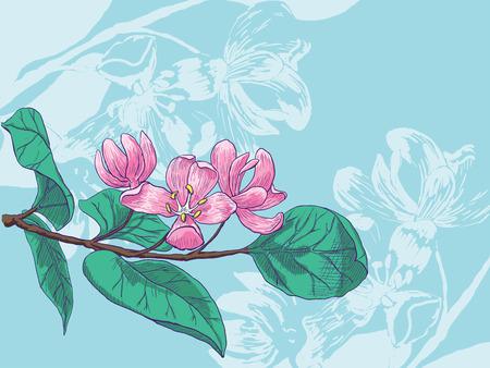 honeysuckle: blossoms of honeysuckle. Vector flowering branch.