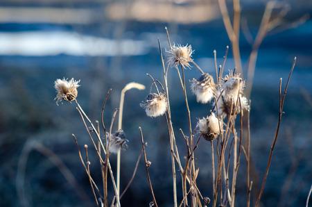 flores secas: