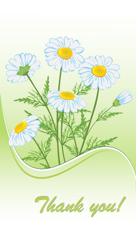 yellow daisy: Card with chamomile flowers. illustration.