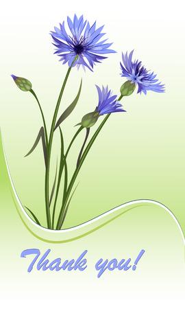 cornflowers: Card with cornflowers. illustration. Illustration