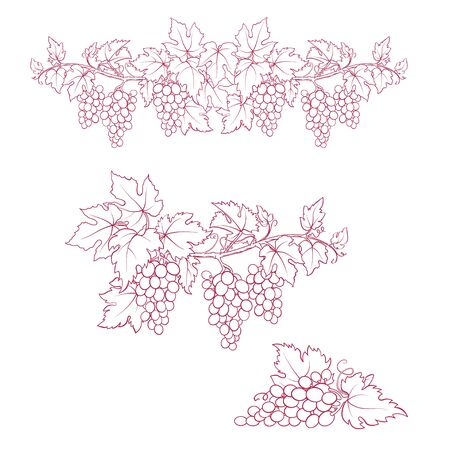 Bunches of grape. Dark-red and white sketches. Hand drawn illustration.  イラスト・ベクター素材