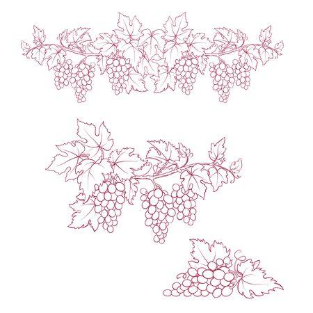 Bunches of grape. Dark-red and white sketches. Hand drawn illustration. Ilustração