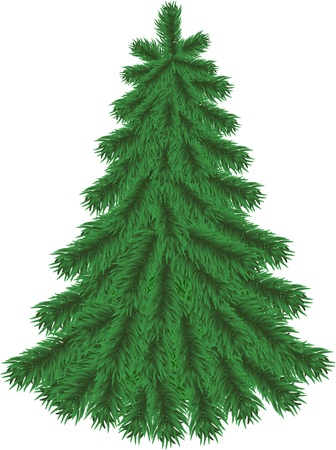 bare tree: Fir tree without Christmas decorations isolated on white