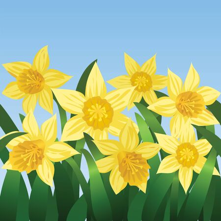 Blue sky and blooming daffodils Vector