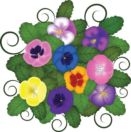 pansies: pansies bouquet
