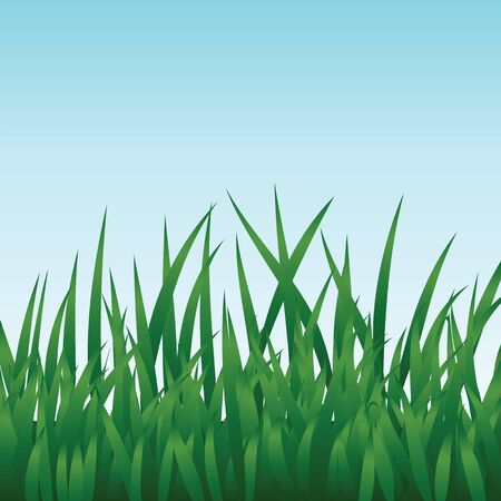 Green grass and blue sky Stock Vector - 17104658