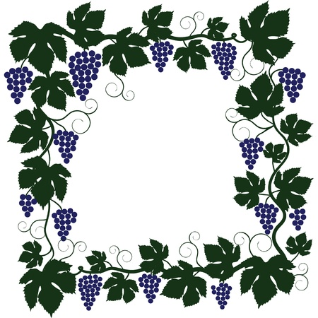 Bunch of grapes and vine frame Vector