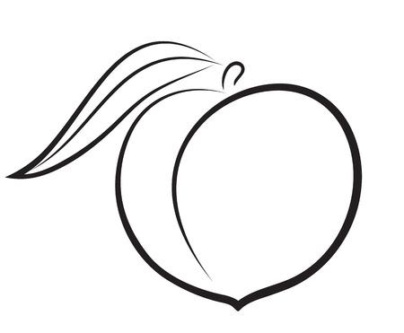 Artistic outline sketch of peach  Vector illustration