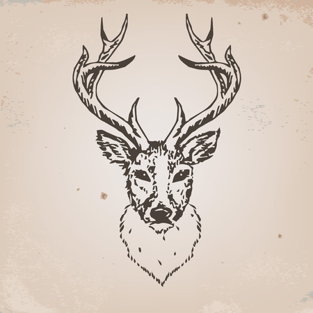 Artistic sketch of deer head  Vector illustration Vector