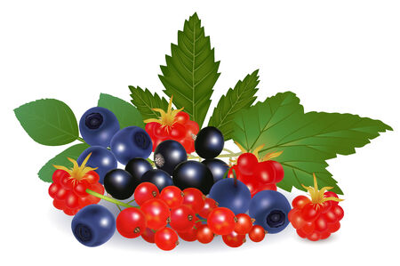 bramble: Redcurrant, blackberry, blueberry and arctic bramble isolated on white