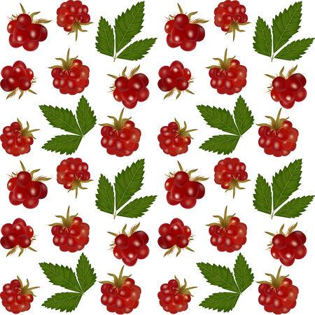 тундра: Бесшовные белый фон с княженики ягоды Иллюстрация