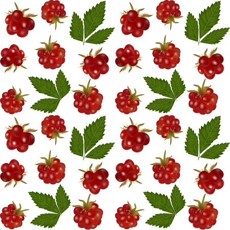 tundra: Seamless white background with arctic bramble berry