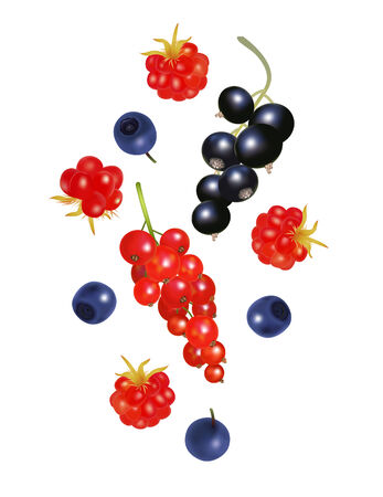 Falling forest ripe berries isolated on white Vector