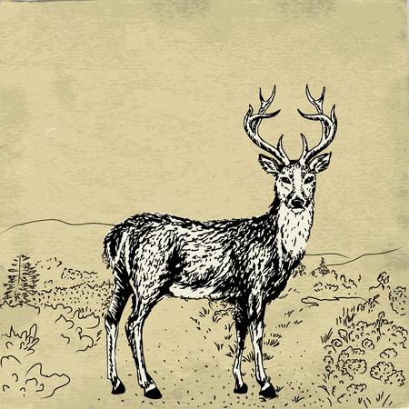 old grunge paper: Hand-drawn sketch of reindeer and landscape on old grunge paper