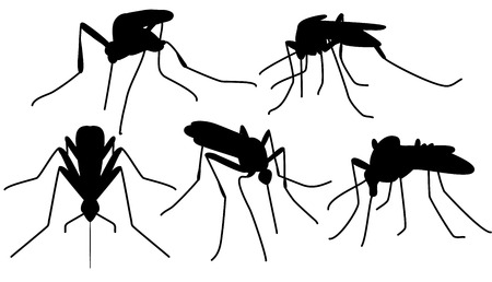 aedes: Set of black biting mosquitoes silhouette isolated on white Illustration