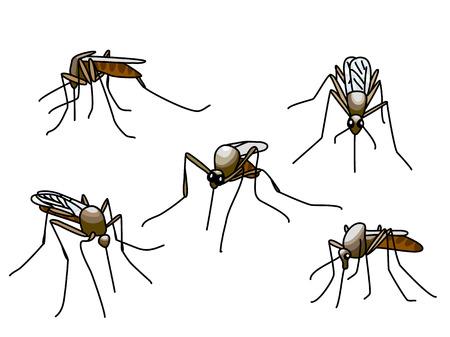 moscerino: Set di zanzare mordere nero isolato su bianco Vettoriali