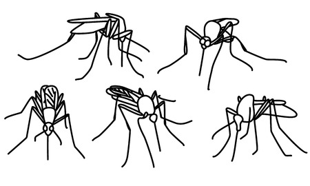 anopheles: Set of black biting mosquitoes contours isolated on white