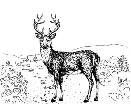 lapland: Hand-drawn sketch of reindeer in Lapland, Finland Illustration