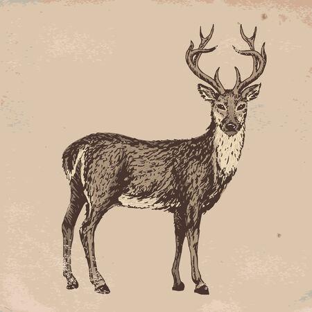 old grunge paper: Hand-drawn sketch of reindeer on old grunge paper