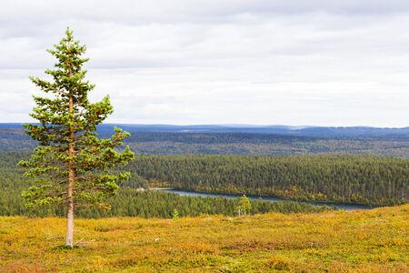lapland: Beautiful autumn ruska colours in Lapland, Finland