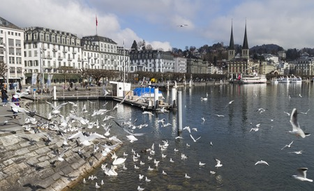 View of town  Lucerne and seagulls on river Reuss. Switzerland photo
