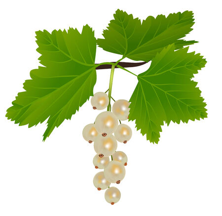 White currants with leaves isolated on white background