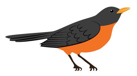 Symbool van de lente - Amerikaanse Robin vogel op wit wordt geïsoleerd