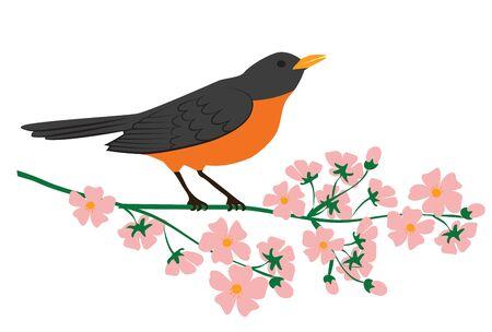 Symbol of spring - american robin bird sitting on blooming tree branch