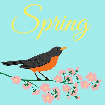 bird nightingale: Symbol of spring - american robin bird sitting on blooming tree branch