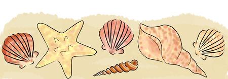 cockleshell: Illustration with hand drawn sand and shells border