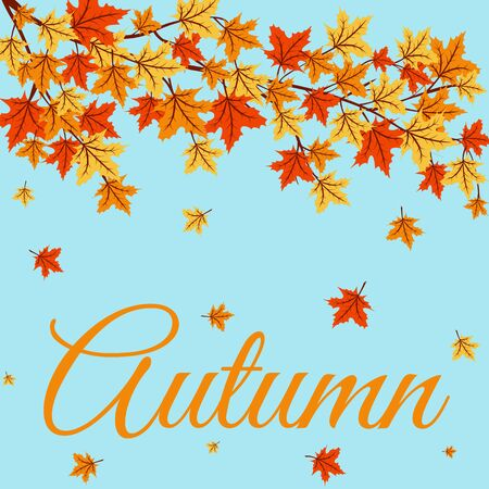 autumn colors: Autumn leaves of maple tree on blue background Illustration