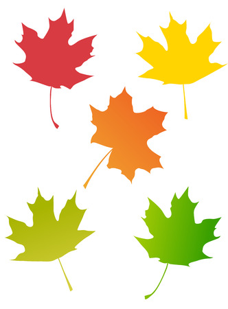 fall leaves: Set of maple autumn leaves isolated on white