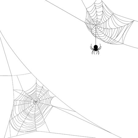 spider webs: Background with two spider webs isolated on white