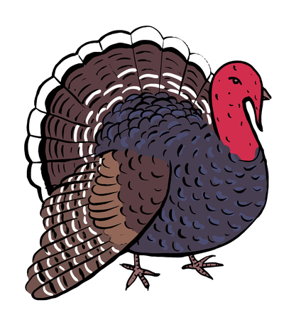 turkey: Hand drawn cartoon turkey for thanksgiving day