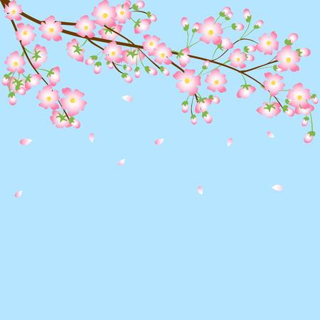 Spring blue background with cherry blossom branch