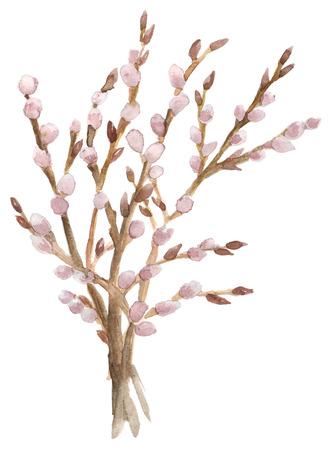Watercolor handgetekende takken van de wilg op wit wordt geïsoleerd