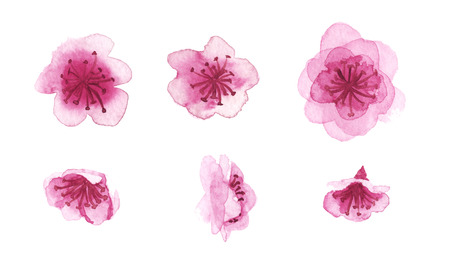 Set of watercolor hand-drawn sakura flowers isolated on white Banco de Imagens