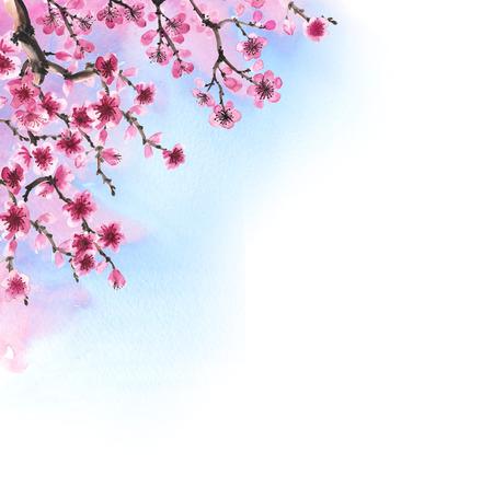 Watercolor handgetekende takken van sakura op wit wordt geïsoleerd